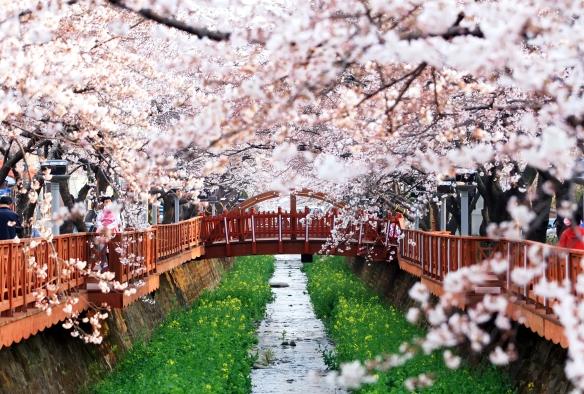 Yoejwacheon Romance Bridge