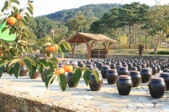 단감테마공원 감식초 농장1(17.10.26)