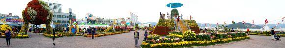 마산가고파국화축제(17.10.24)