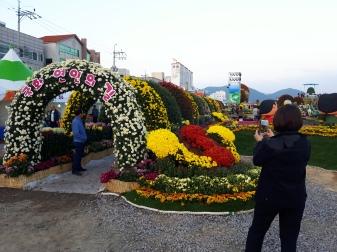 마산가고파국화축제19