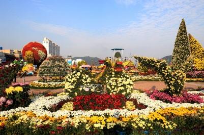 마산가고파국화축제33